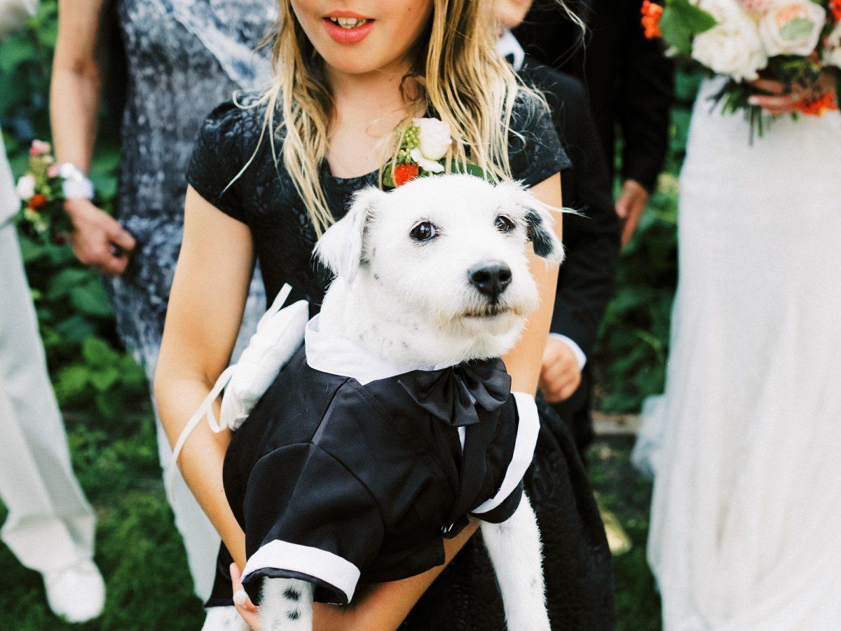 ring bearer dog in suit in Loring Park, Minneapolis, wedding at Bar Lurcat, Minneapolis | ONONA Minneapolis film wedding photographer